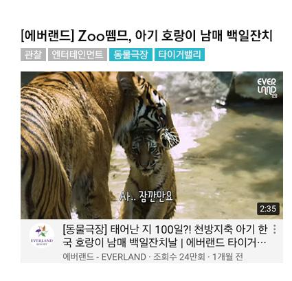 [에버랜드] Zoo뗌므, 천방지축 아기 호랑이 남매 백일잔치, 관찰, 엔터테인먼트 #동물극장 #타이거밸리